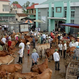 Thanh Luong Cattle Market